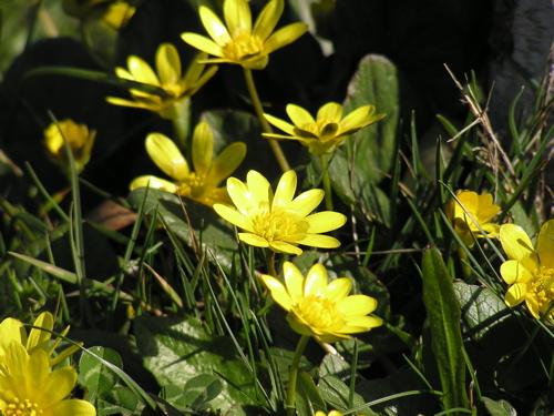 spring-is-sprung.jpg