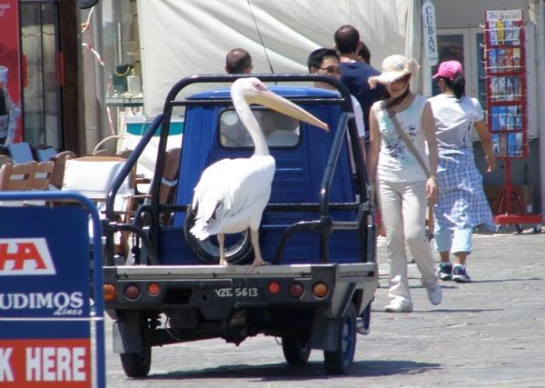 pink-pelican.jpg