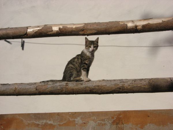 kitten, Cemil's Pension, Tekkale