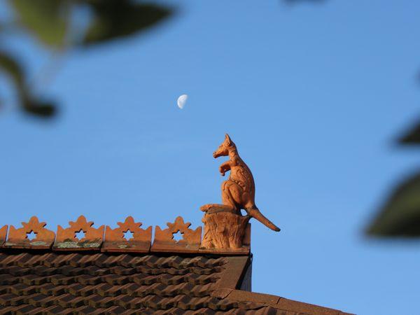 Kangaroo rooftop