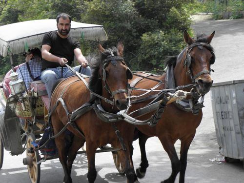 Horse carts on Burgazada