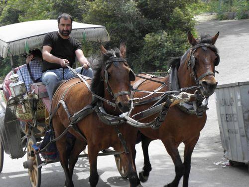 Horse carts on Burgazada