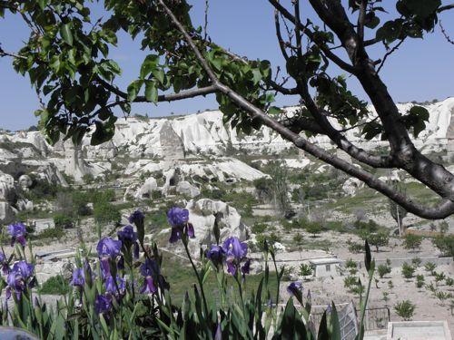 Irises and the hillside