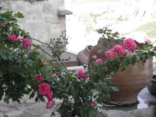 roses at kelebek