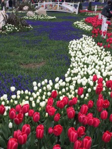 Spring tulips in Gülhane Park, Istanbul: Ann Marie's Istanbul