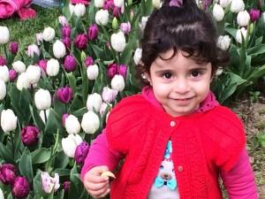 Every Turk loves tulip season: Ann Marie's Istanbul